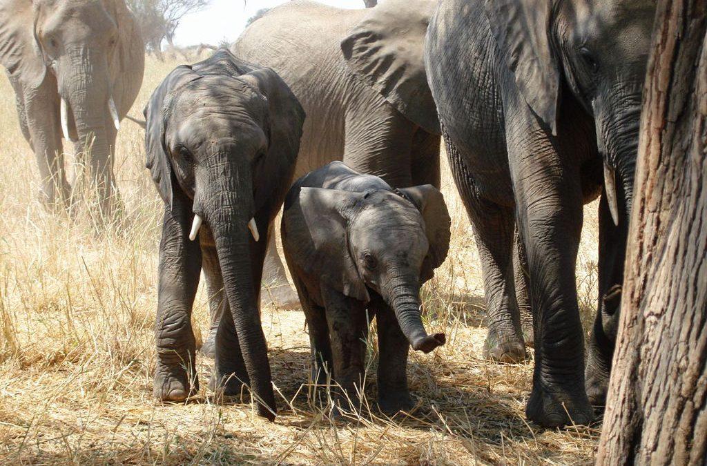 Tanzania: WWF Faulted On Elephant Report